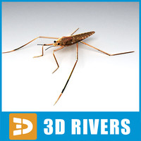 Water Strider 3D models