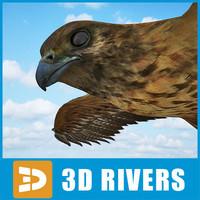 Buzzard 3D models