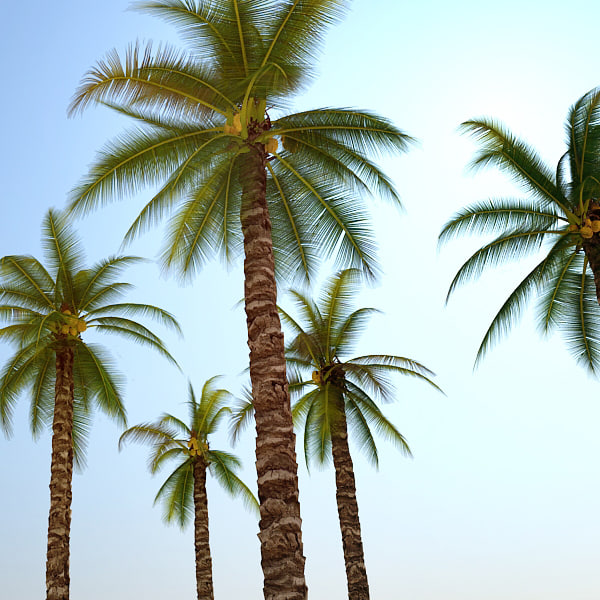 PALM TREES COLLECTION 3D Models
