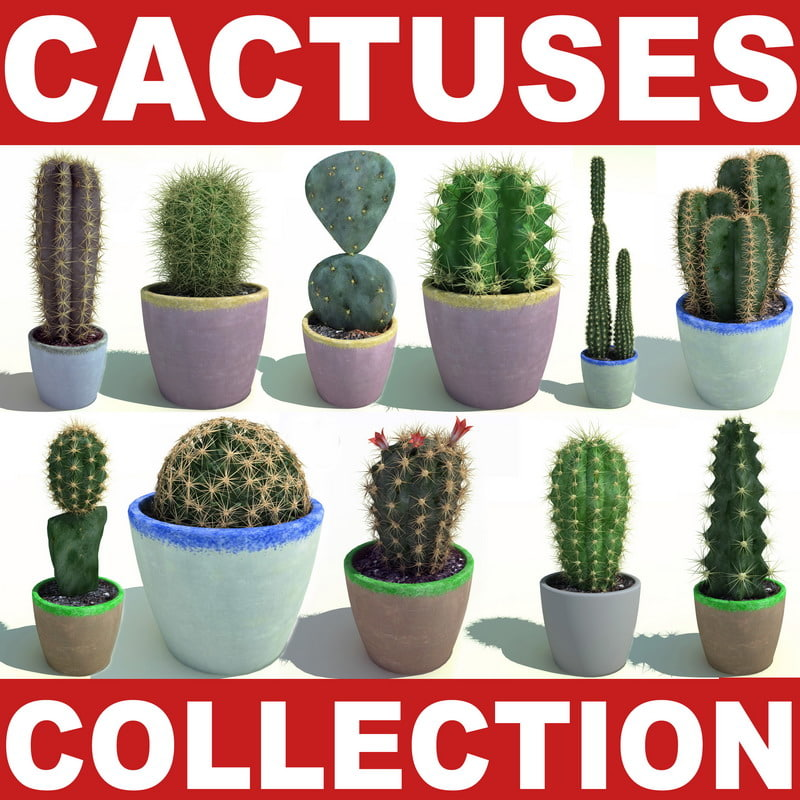 Cactuses_collection_00.jpg