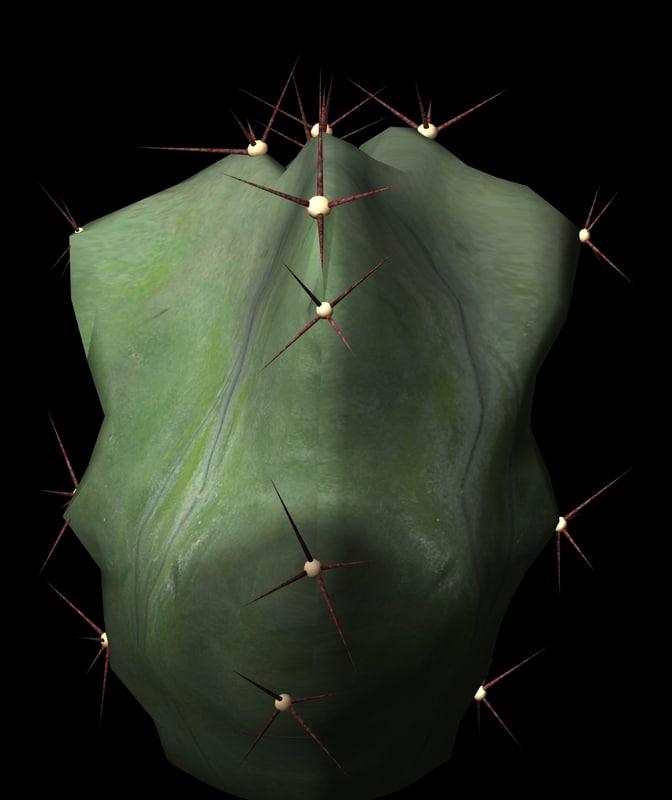 Lemairiocereus Pruinosus maya