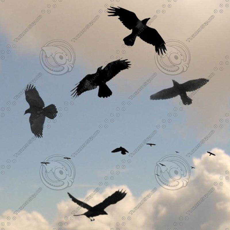 crow_realtime.jpg