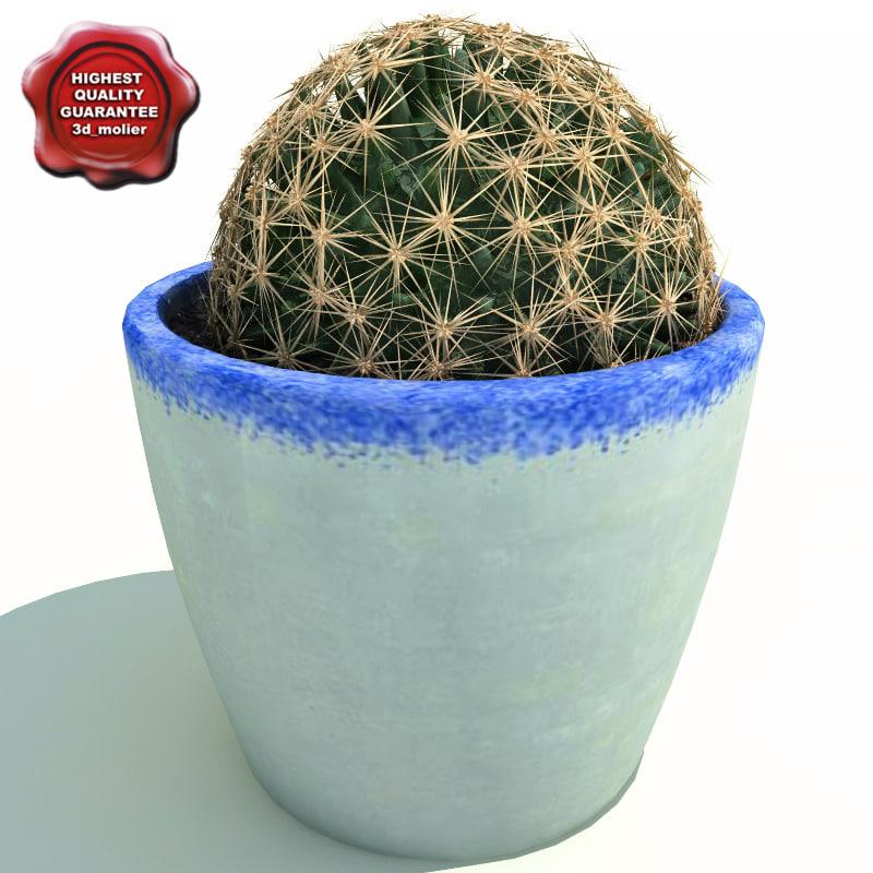 Cactus Ferocactus acanthodes