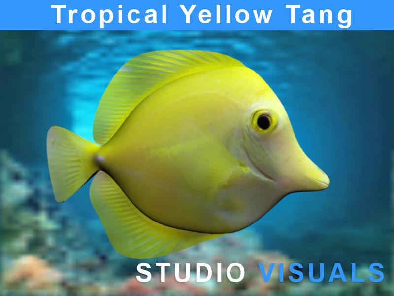 Yellow_Tang1.jpg