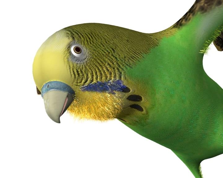 bird_detay.jpg