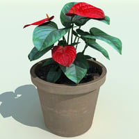 anthurium 3D models