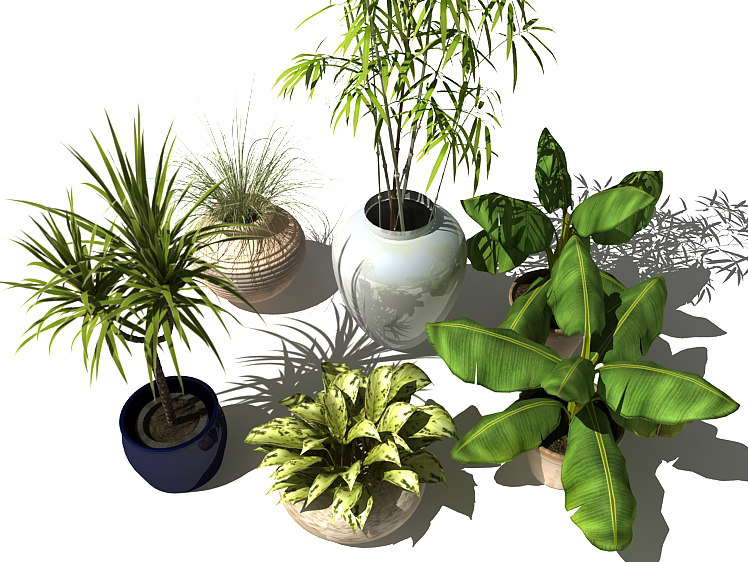plants_v1_08.jpg