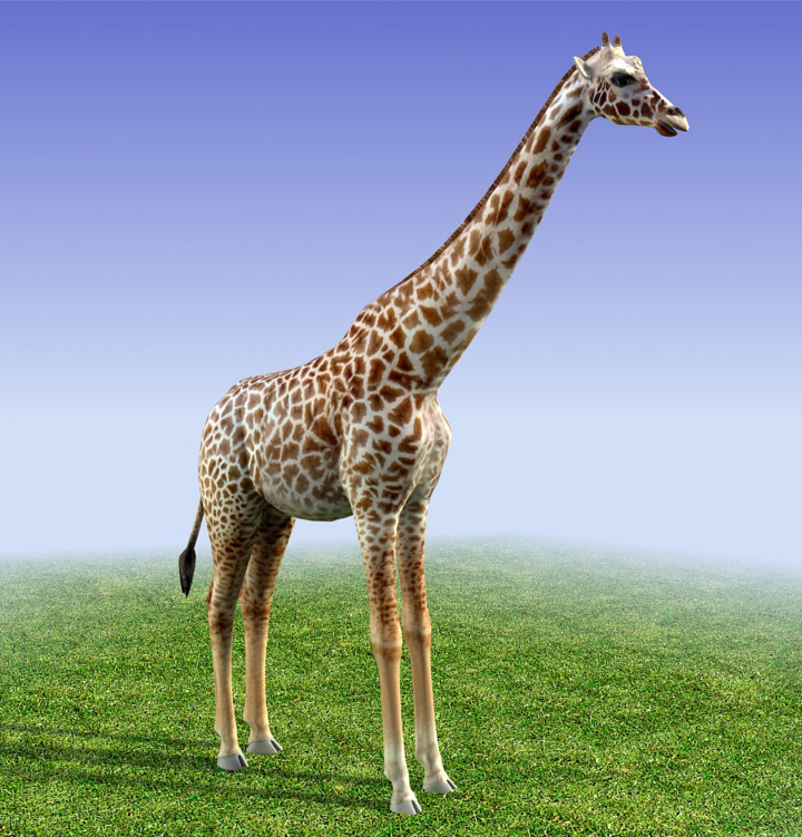 Giraffe 3d model low poly