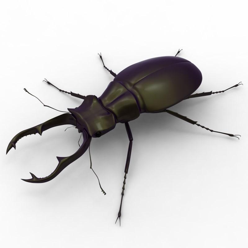 stag_beetle.1.jpg