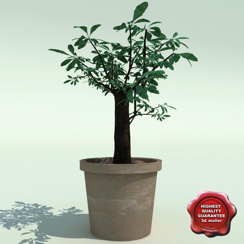 Bonsai tree V3