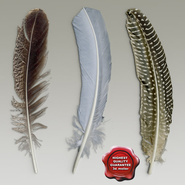 Bird feathers collection 3D Models
