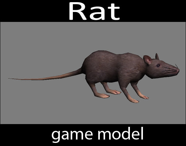 3D Rat - game model.jpg
