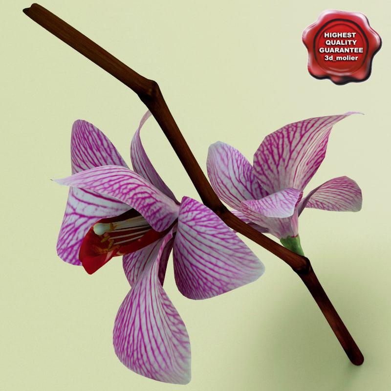 Phalaenopsis_orchid_0.jpg