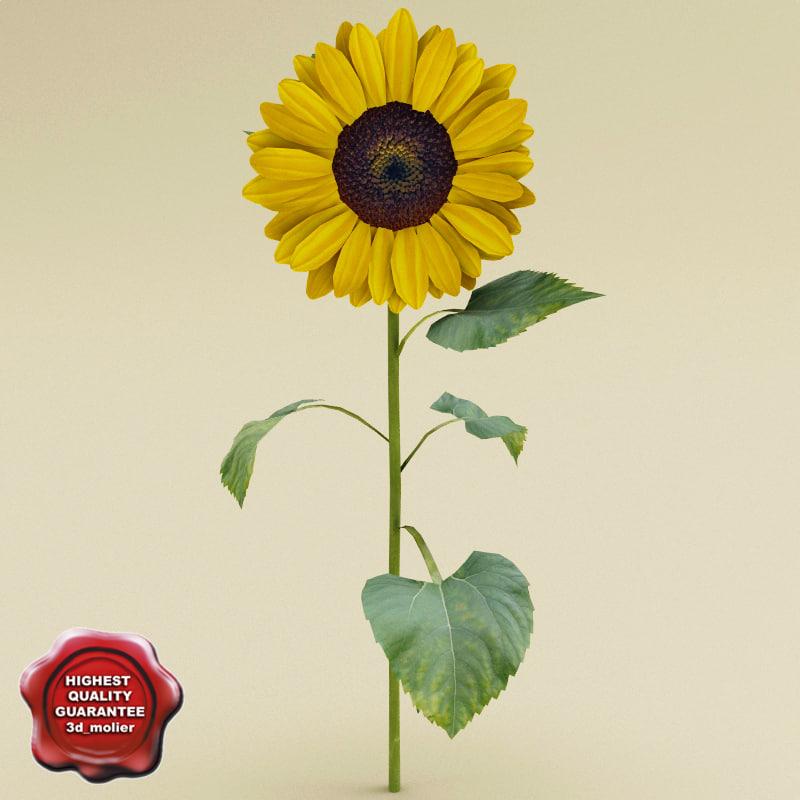 Sunflower_0.jpg