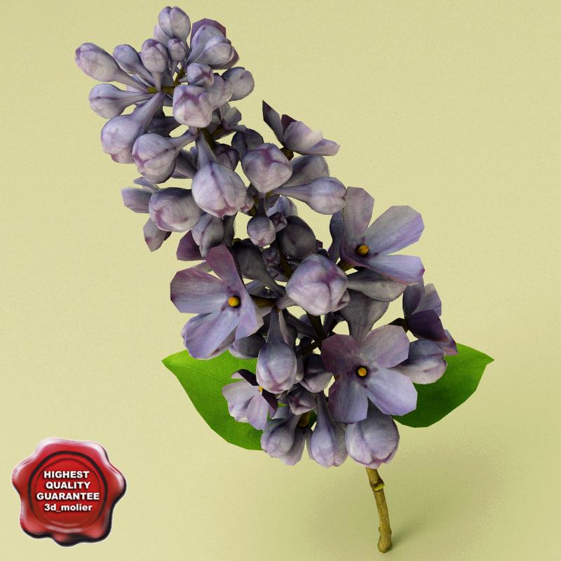 Lilac_Flower_0.jpg