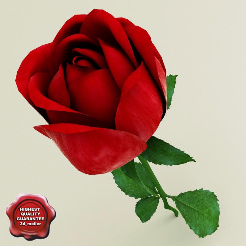 Rose_0.jpg