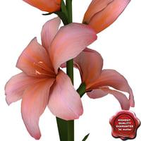 gladiolus 3D models