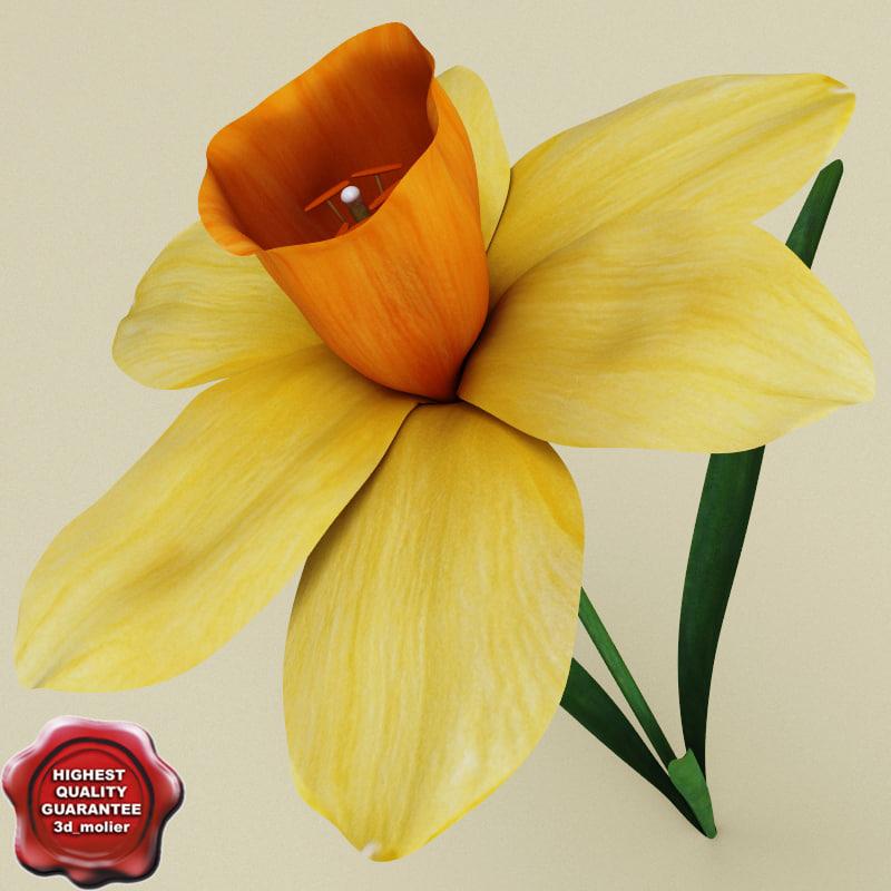 Narcissus_0.jpg