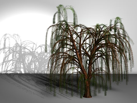 wipingwillow.rar 3D Models