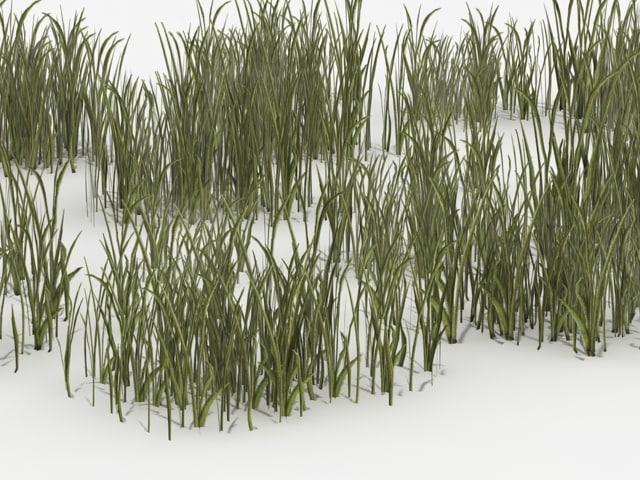 grass_001.jpg