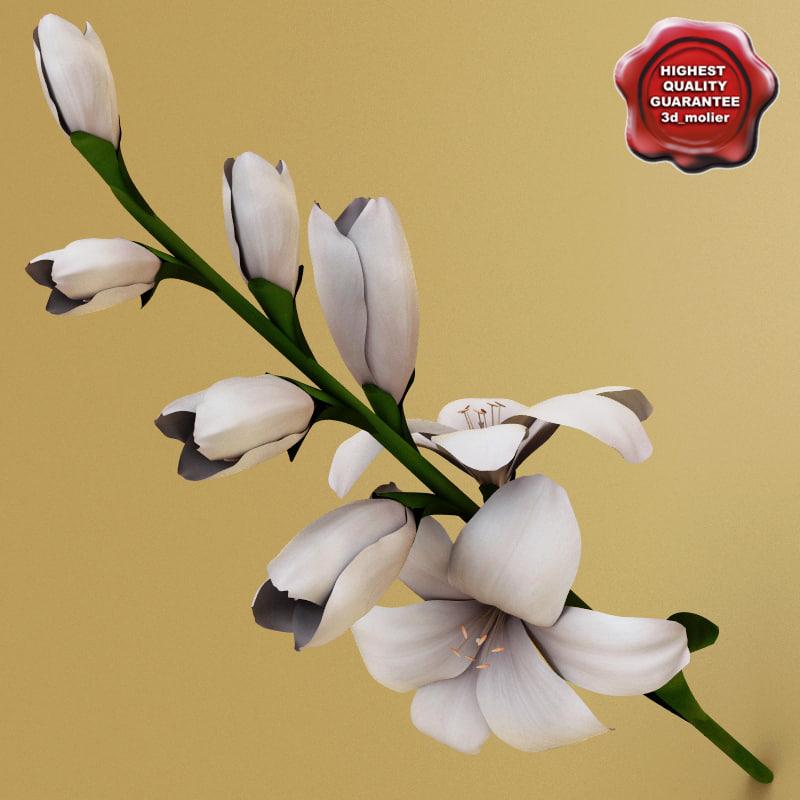 Gladiolus_V2_0.jpg