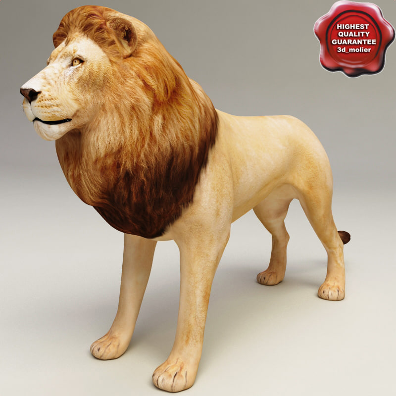 Lion_00.jpg