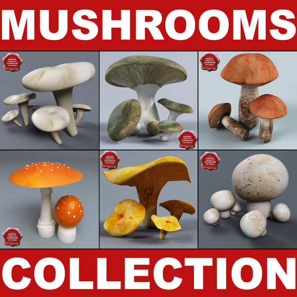 Mushrooms Collection 3D Models