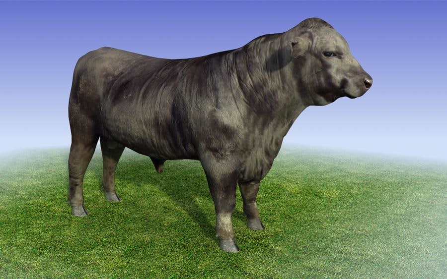 black_bull_3dmodel_sample04.jpg