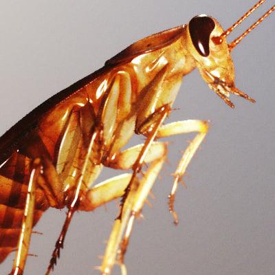 roach 3D Models