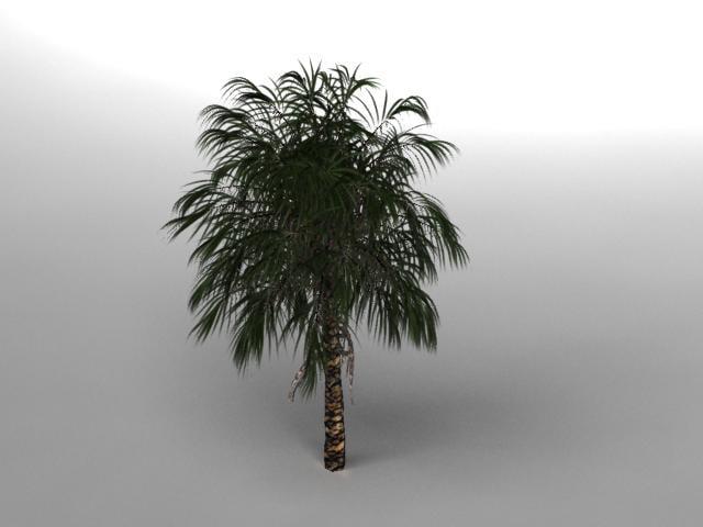palm1.jpg