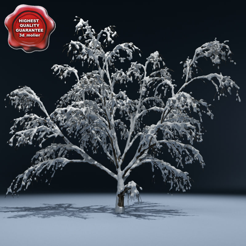 Winter_Tree_V4_00.jpg