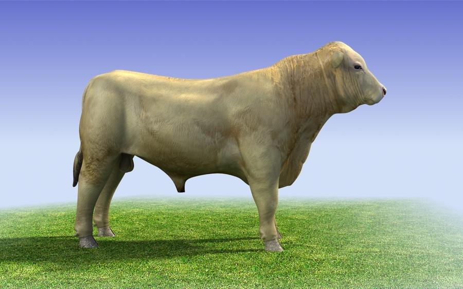 white_bull_3d_model_sample02.jpg