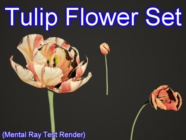 Tulip Flower Set 001 Texture Maps