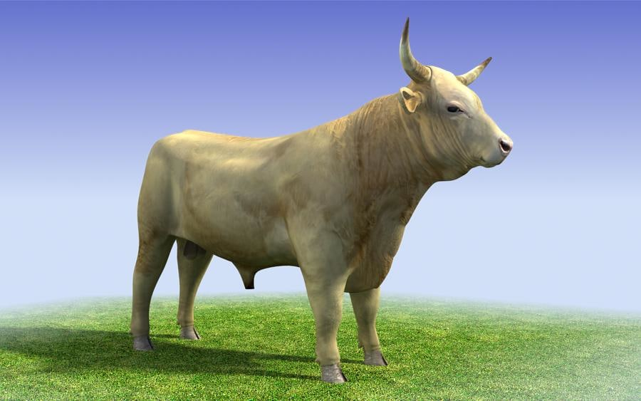 white_bull_3d_model_sample01.jpg