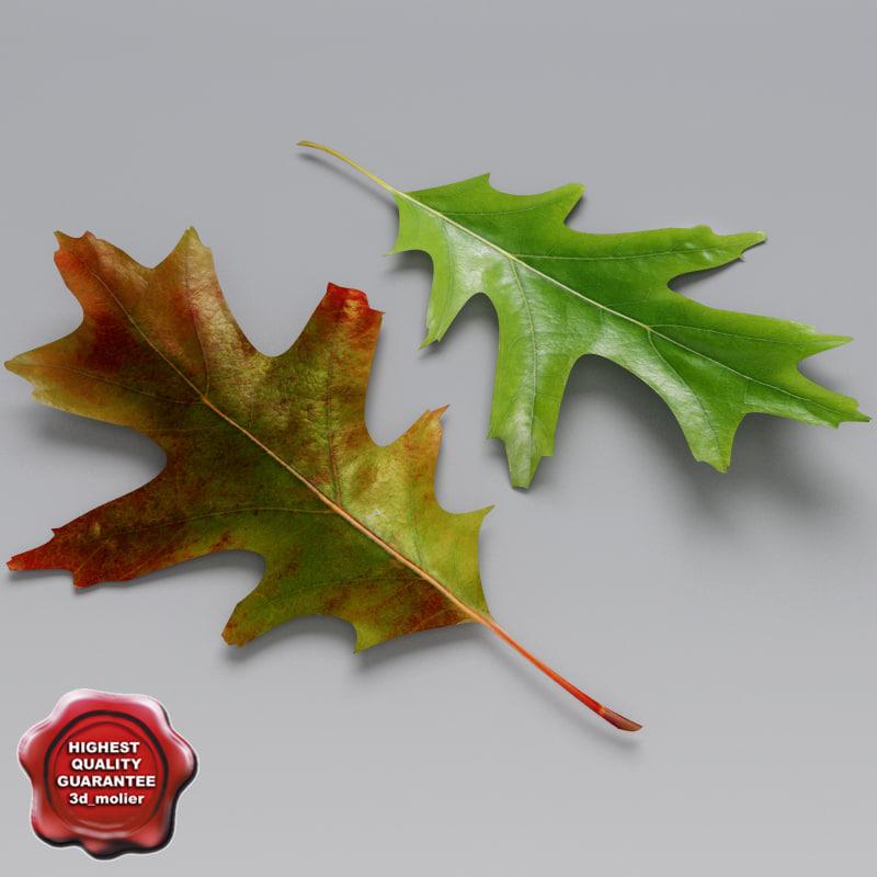 Oak_Leaves_Summer_Autumn_00.jpg