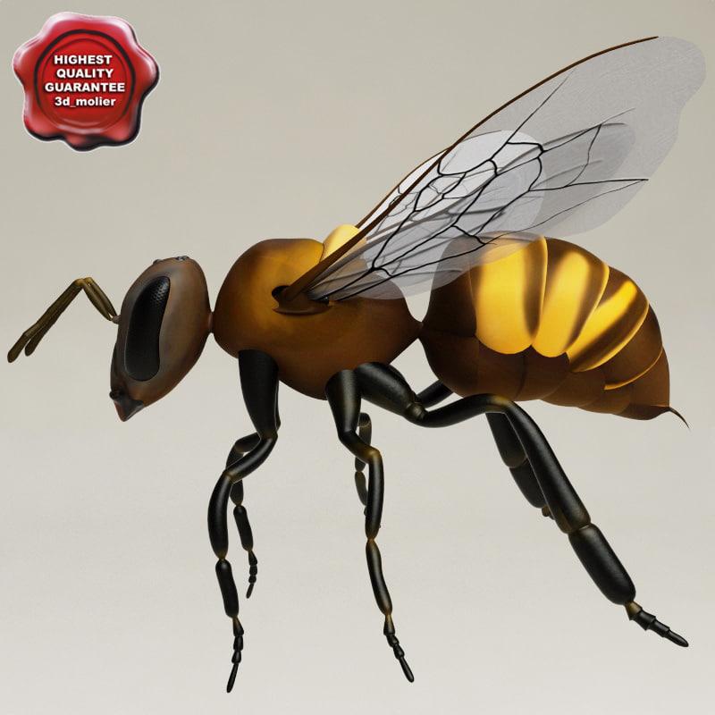 Wasp_00.jpg
