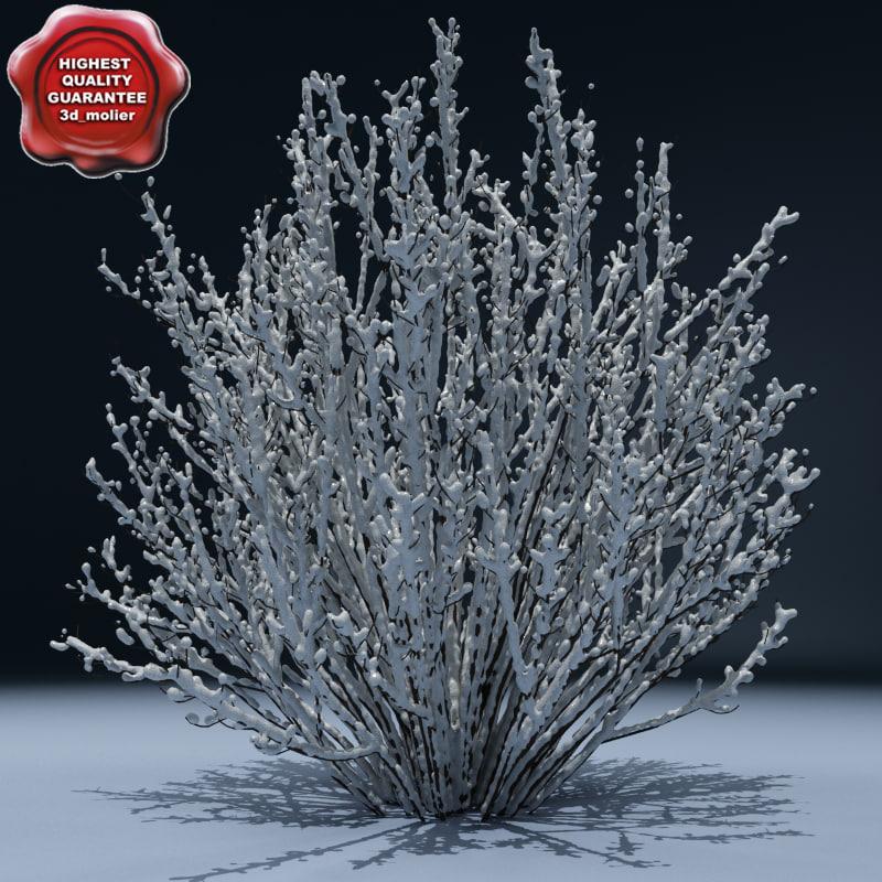 Winter_Tree_V7_00.jpg