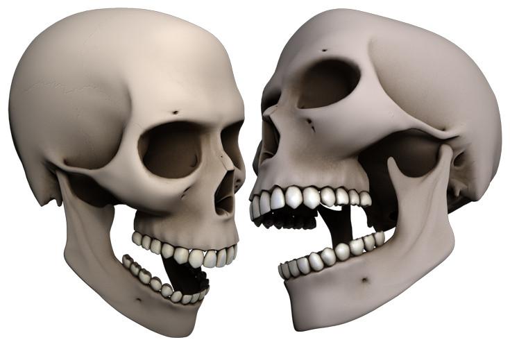 skull_a.jpg