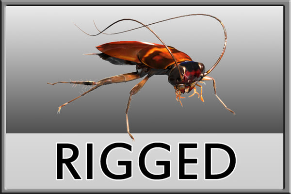 Roach rigged 3D Models