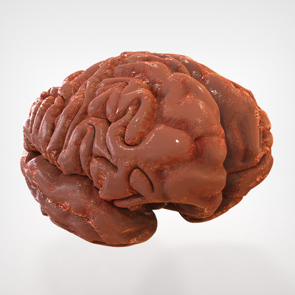 Human Brain Structure 3D Models