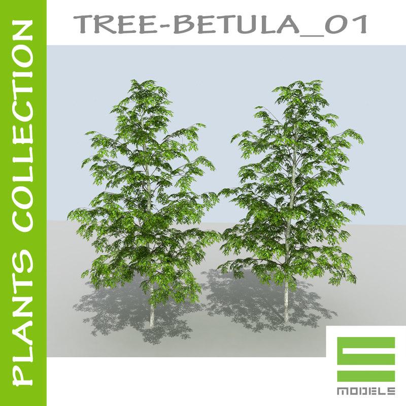 BETULA_first_page2.jpg