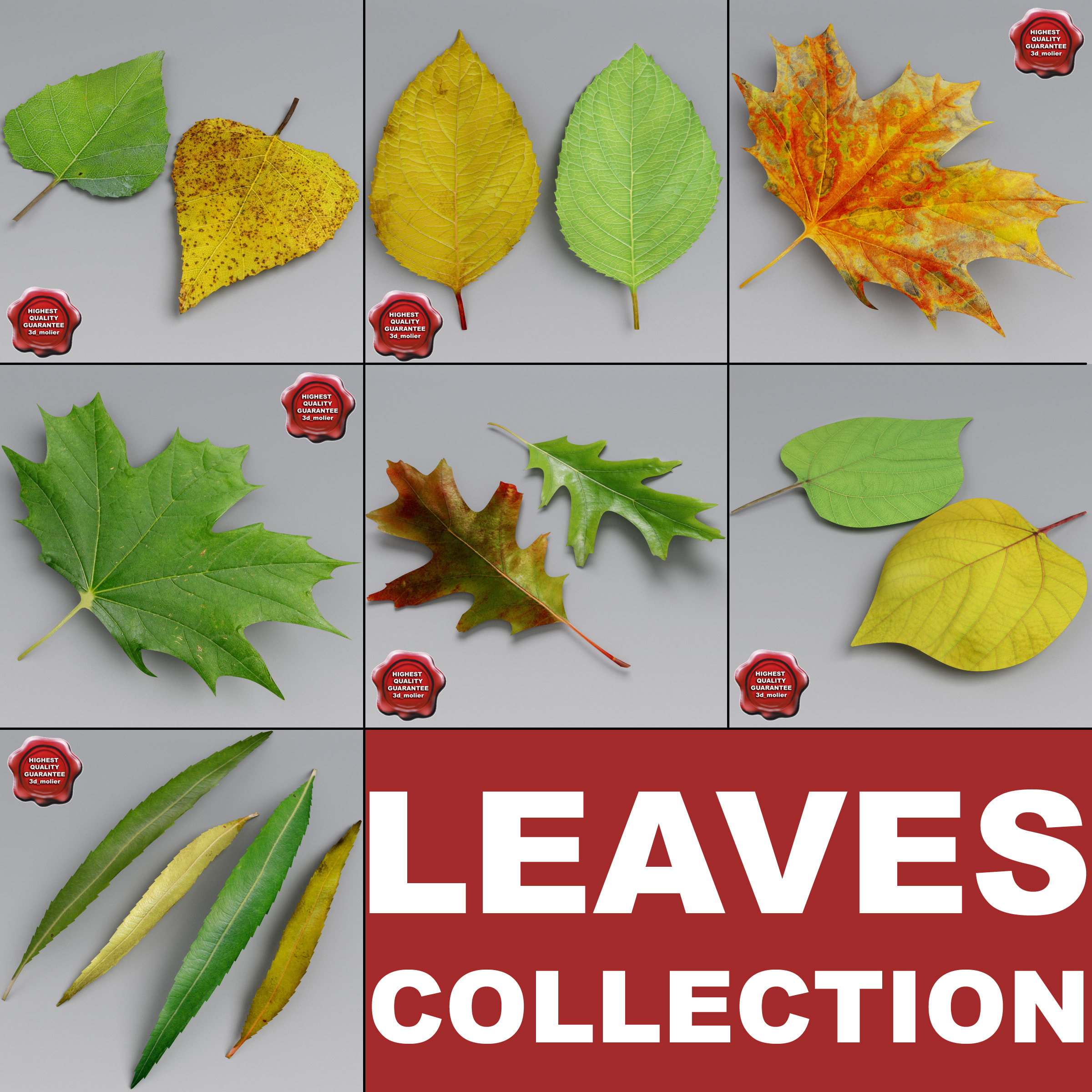 Leaves_Collection_00.jpg