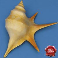 Aporrhais shell 3D models