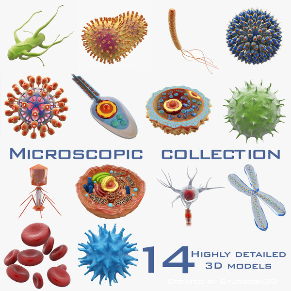 Microscopic Collection 3D Models
