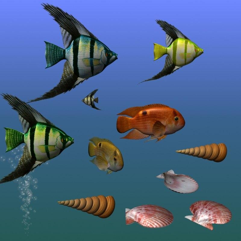 fishes shells 3d model