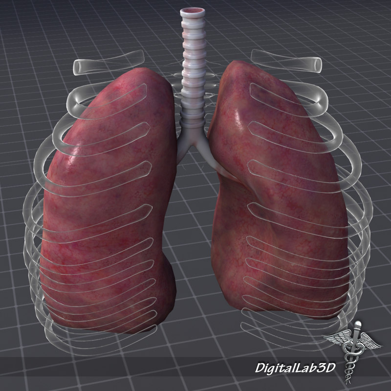 DL3D_LungsExternal3.JPG
