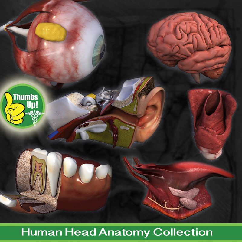 Head_Collection.jpg