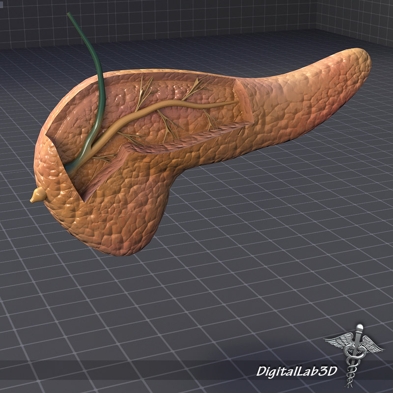 DL3D_PancreasDetailed_1.JPG