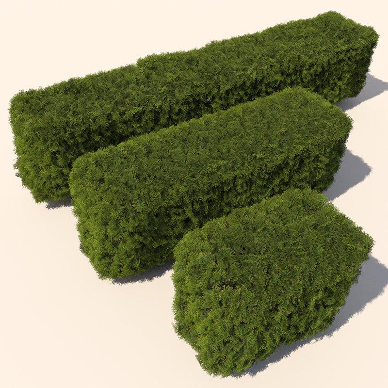 cedar_hedge_01.jpg