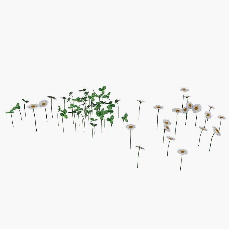 plant daisy and clover
